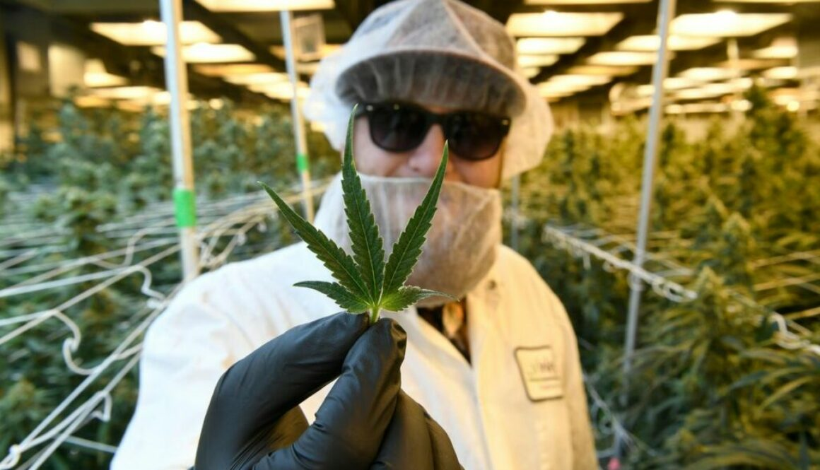 Cannabis Education Gets Here (Virtually) At More American Universities