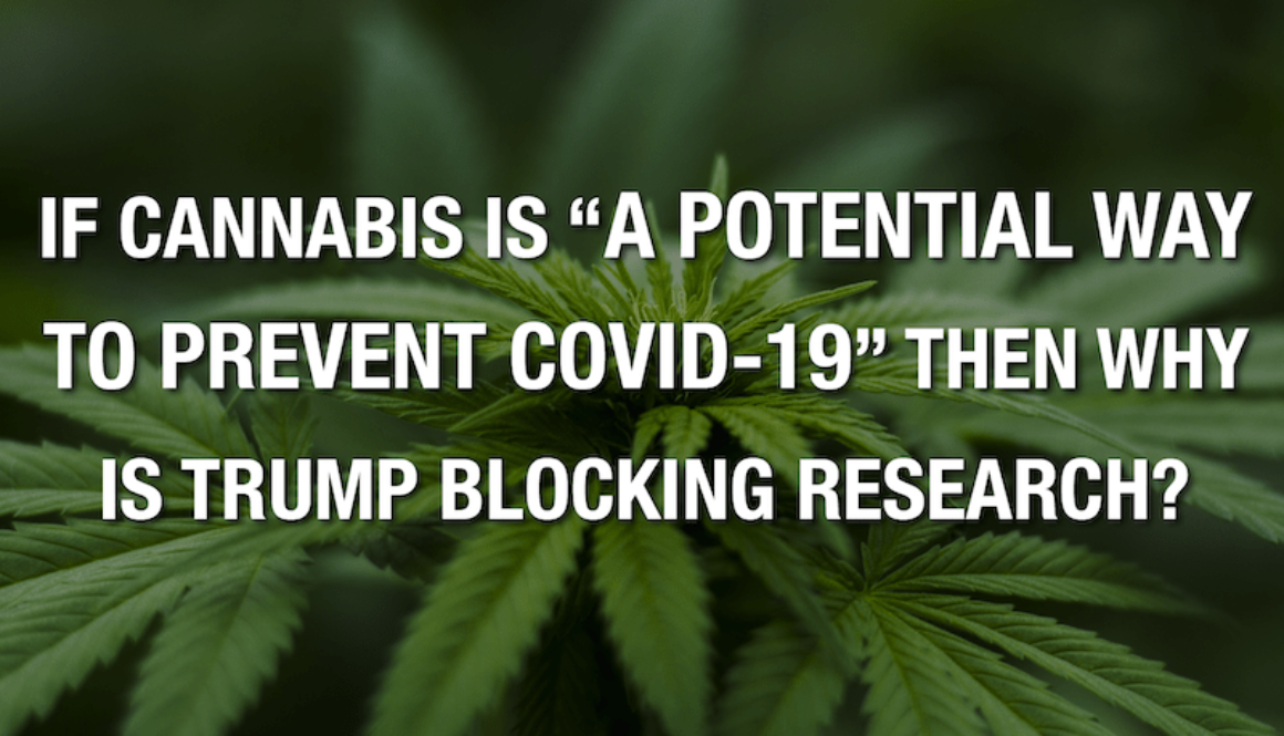 """If Cannabis Is """"A Prospective Method To Avoid COVID-19"""" Then Why Is Trump Obstructing Research Study?"""