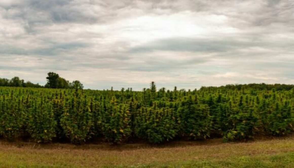 Will The U.S. Hemp Market Ever Be Its Own Market?