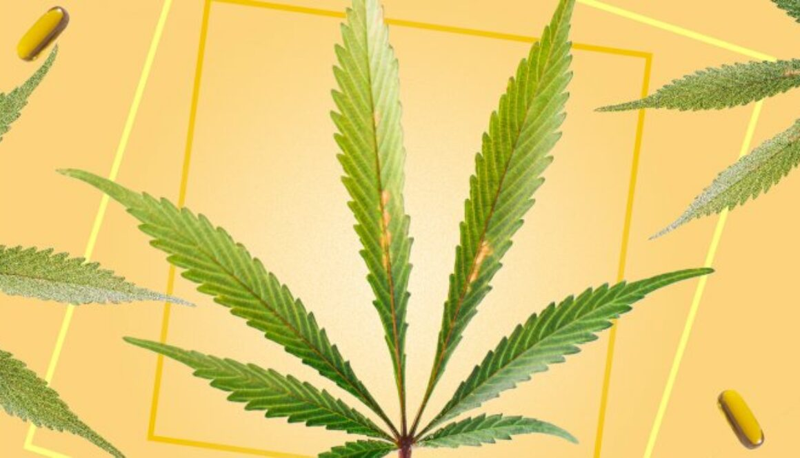Hemp Mythbusters: 5 Myths About The Plant That Required To Be Debunked